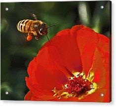 Pollination Acrylic Print by Rona Black