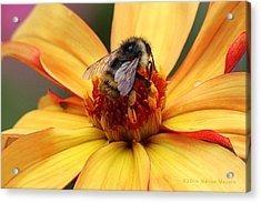Pollinator  Acrylic Print by Melisa Meyers