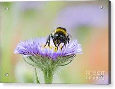 Pollinator  Acrylic Print by Tim Gainey