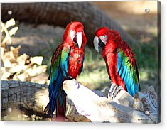 Polly And Pauly Acrylic Print by Dick Botkin