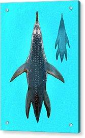 Polycotylus Marine Dinosaur Acrylic Print