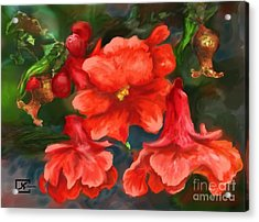 Pomegranate Blooms Floral Painting Acrylic Print by Judy Filarecki