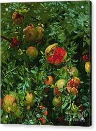 Pomegranates    Majorca Acrylic Print by John Singer Sargent