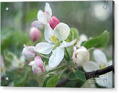 Pomme D Api 01 - S01bt01c Acrylic Print by Variance Collections