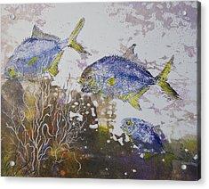 Pompano Trio Acrylic Print by Nancy Gorr