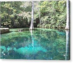 Ponce De Leon Springs Acrylic Print by Michele Kaiser