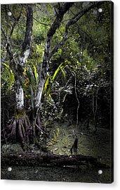 Pond Apple Acrylic Print by Rudy Umans
