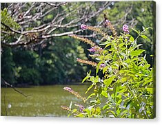 Pond At Norfolk Botanical Garden 12 Acrylic Print