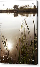 Pond Acrylic Print by Les Cunliffe