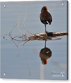 Acrylic Print featuring the photograph Pond Reflection by Debby Pueschel