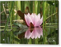 Pond Reflections Acrylic Print by Judy Whitton