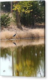 Pond Side Acrylic Print by Alicia Knust