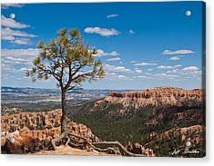 Acrylic Print featuring the photograph Ponderosa Pine Tree Clinging To Life On Canyon Rim by Jeff Goulden