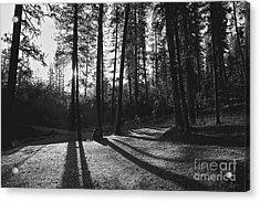 Ponderosa Shadows Acrylic Print by Lennie Green