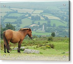 Pony Atop Hill Acrylic Print by Jf Halbrooks