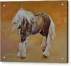 Gypsy Pony Acrylic Print by Michael Creese