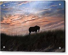 Pony On The Dunes Acrylic Print by Betsy Knapp