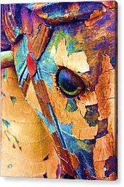 Pony Acrylic Print by Julio Lopez