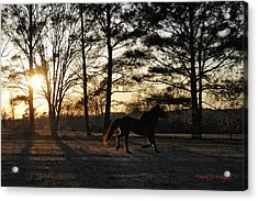 Pony's Evening Pasture Trot Acrylic Print by Paulette B Wright