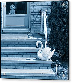 Poodle And Swan Acrylic Print