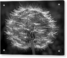 Acrylic Print featuring the photograph Poof - Black And White by Joseph Skompski