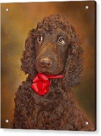 Pooka  Acrylic Print by Brian Cross