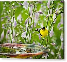 Poolside Perch Acrylic Print