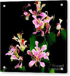 Poor Mans Orchid Acrylic Print