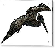 Pop Art - Pelican Selection Acrylic Print