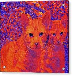 Pop Art Cats Acrylic Print by Jane Schnetlage