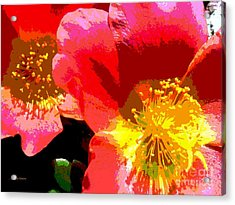 Acrylic Print featuring the photograph Pop Goes The Poppy by Sally Simon