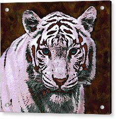 Popart White Tiger- Larger Acrylic Print by Jane Schnetlage