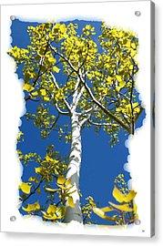 Poplar Tree In Spring  Acrylic Print by Will Borden