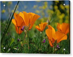 Acrylic Print featuring the photograph Poppies 2 by Ken Dietz