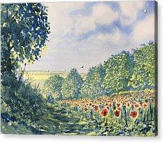 Poppies A'plenty Acrylic Print