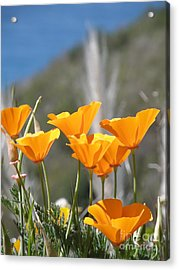 Poppies Acrylic Print by Bev Conover