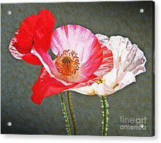 Poppies  Acrylic Print by Chris Berry