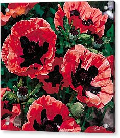 Poppies Acrylic Print by Cole Black