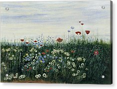 Poppies, Daisies And Other Flowers Acrylic Print