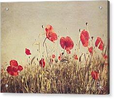 Poppies Acrylic Print by Diana Kraleva