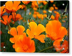 Acrylic Print featuring the photograph Poppies by Edward R Wisell
