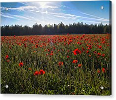Acrylic Print featuring the photograph Poppies Field Forever by Meir Ezrachi