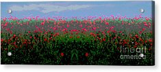 Poppies Field Acrylic Print