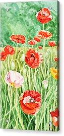 Poppies Impressions I Acrylic Print