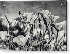 Poppies In Mono Acrylic Print by Georgia Fowler