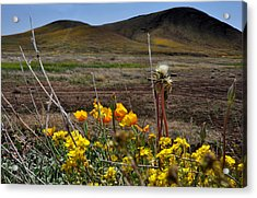 Poppies In The Field Chiracahua Mountains Acrylic Print by Diane Lent
