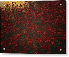 Poppies In The Rain Acrylic Print