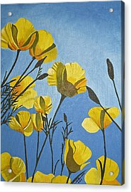 Poppies In The Sun Acrylic Print