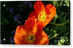 Poppies Acrylic Print by Jeanne  Woods