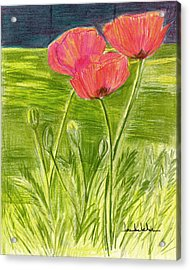 Poppies Acrylic Print by Lou Belcher